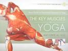 key-muscles-yoga